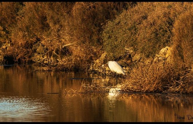 Observer les oiseaux au Salin des Pesquiers 24 - Hyères