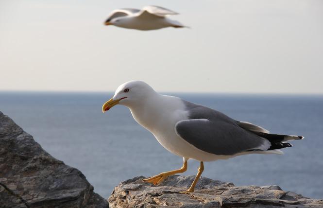 Observer les oiseaux aux Vieux Salins 6 - Hyères