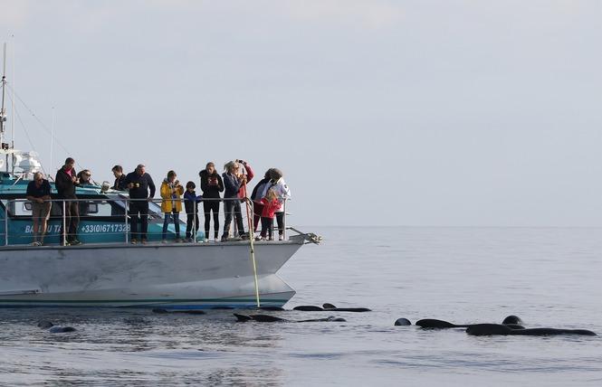 Bateau Taxi vers les îles (Espace Mer) 8 - Hyères