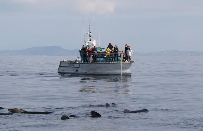 Bateau Taxi vers les îles (Espace Mer) 10 - Hyères